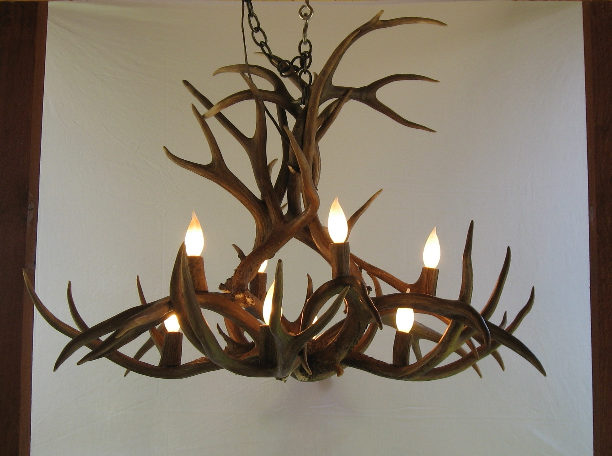 Turquoise Antler Chandeliers Inside Well Known Antler Ideas – Grousedays (View 9 of 20)