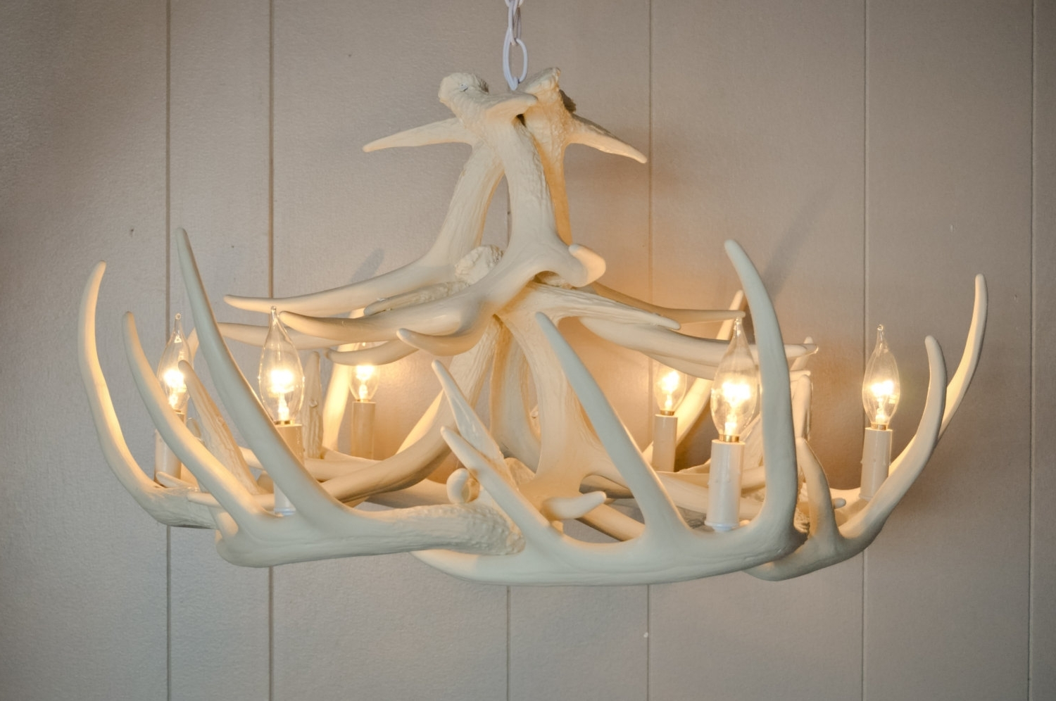White Antler Chandelier Intended For Recent Chandeliers Design : Marvelous Elk Antler Chandelier Deer Light (View 5 of 20)