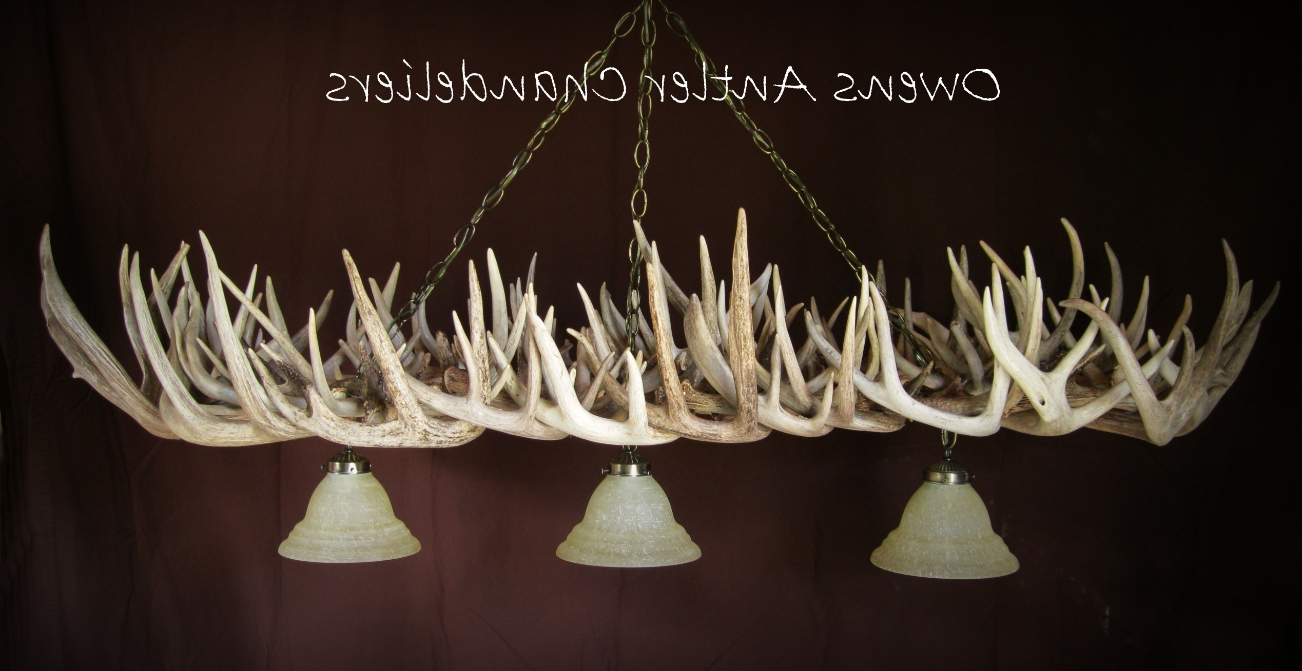 White Antler Chandelier – Nurani For Most Popular White Antler Chandelier (View 16 of 20)