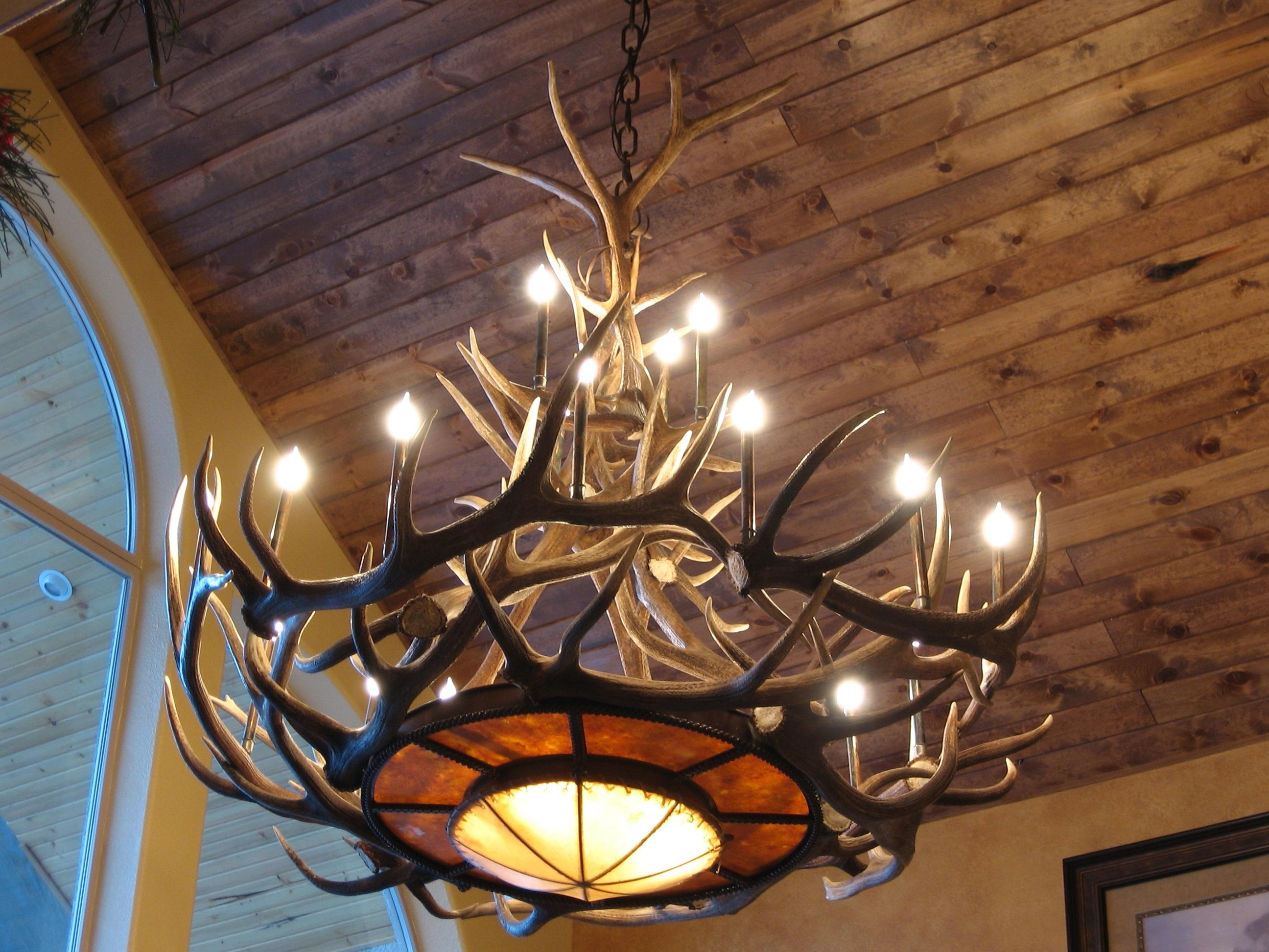 Antler Chandeliers And Lighting Inside Newest Tweed's Rawhide Mica Elk Antler Chandelier (View 3 of 20)