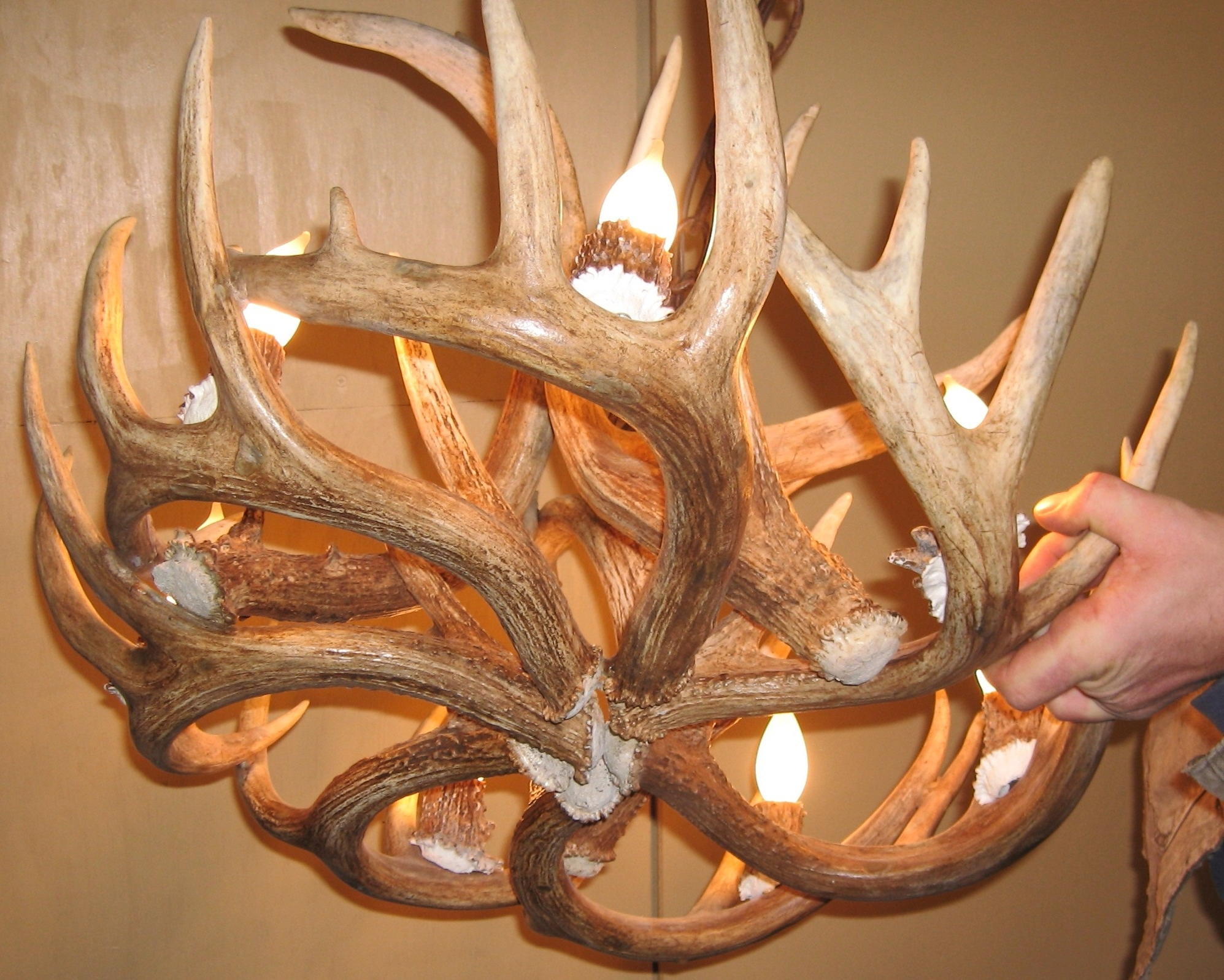 Antler Chandeliers Intended For Well Liked Whitetail Deer Antler Chandelier (Gallery 9 of 20)
