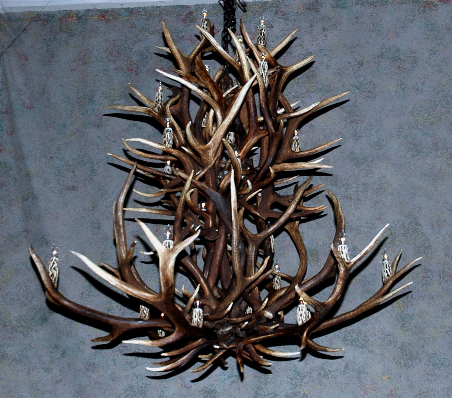 Newest Antler Chandeliers, Deer Antler Chandelier, Deer Antler Lamps Inside Large Antler Chandelier (Gallery 6 of 20)