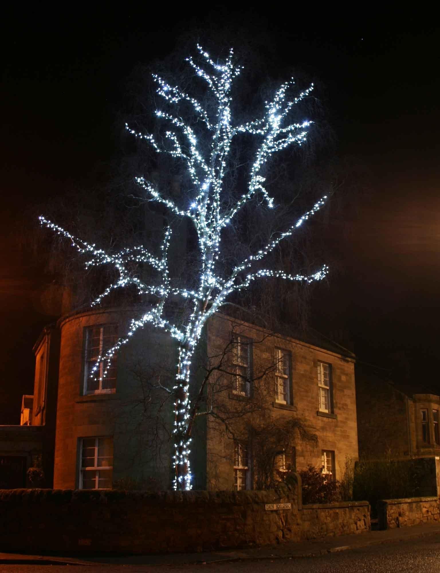 Christmas Light Ideas (View 10 of 20)