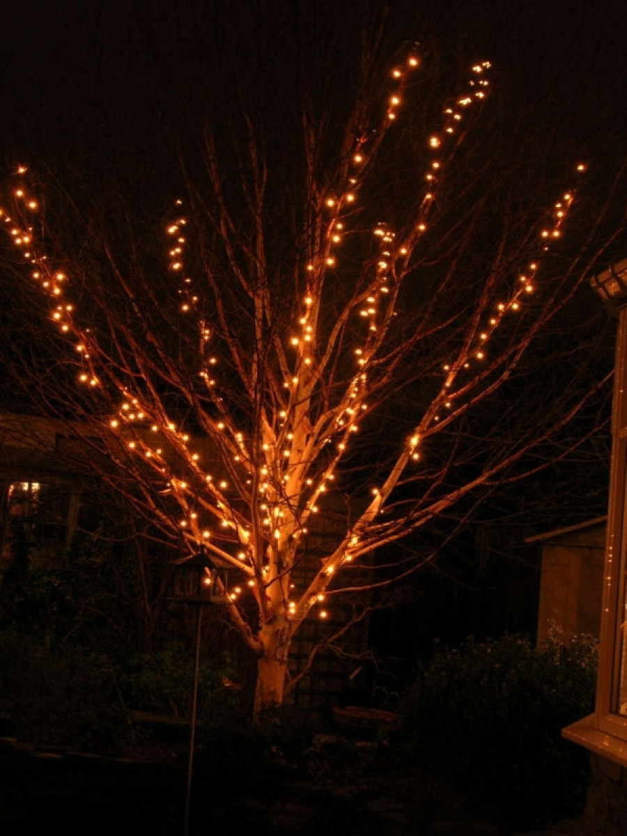 Decorating Outdoor Trees How To Put Christmas Lights On A Large Tree Regarding Best And Newest Outdoor Lanterns For Trees (View 6 of 20)