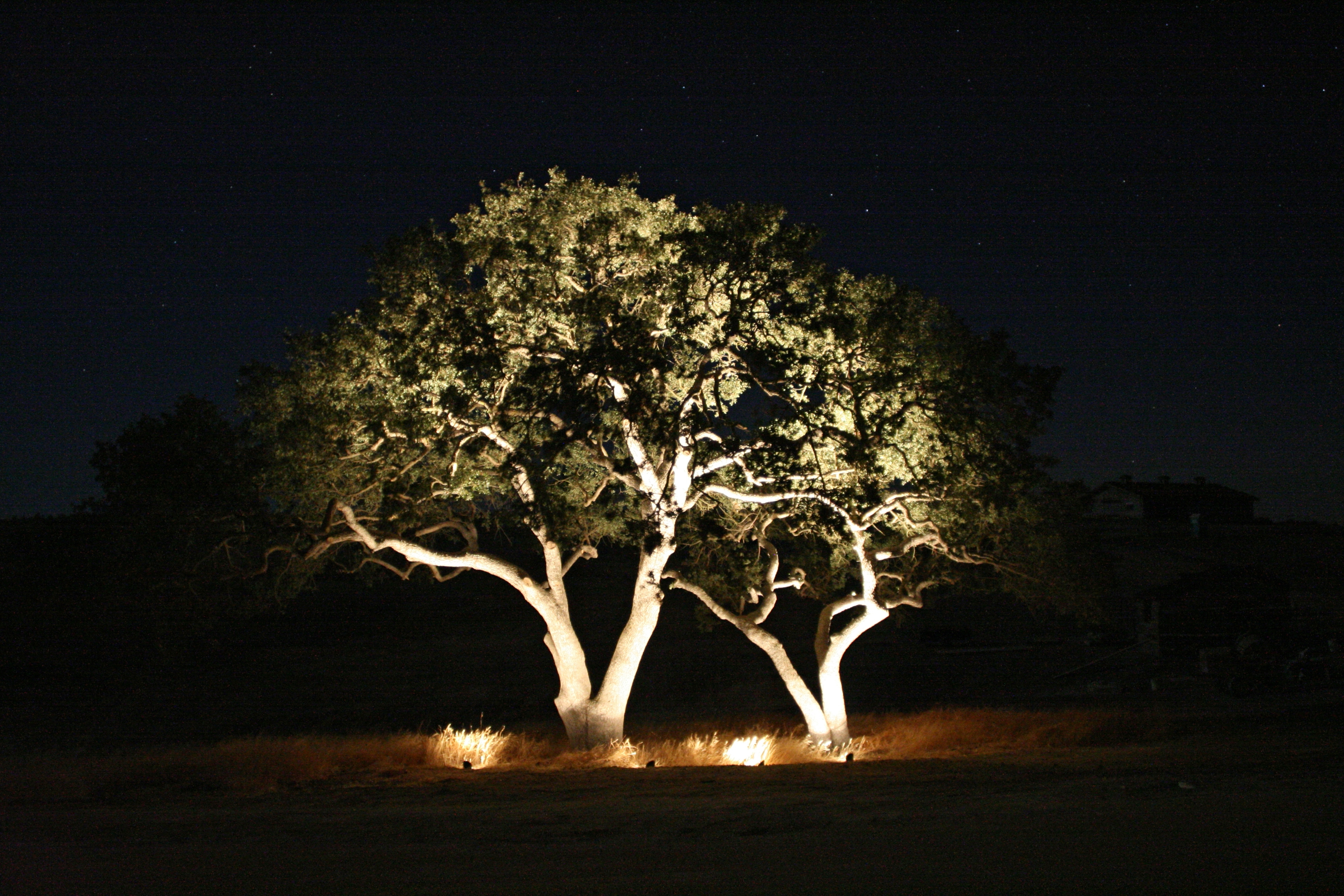 Outdoor Lights Trees – Outdoor Lighting Ideas Regarding Well Known Outdoor Lanterns For Trees (View 9 of 20)