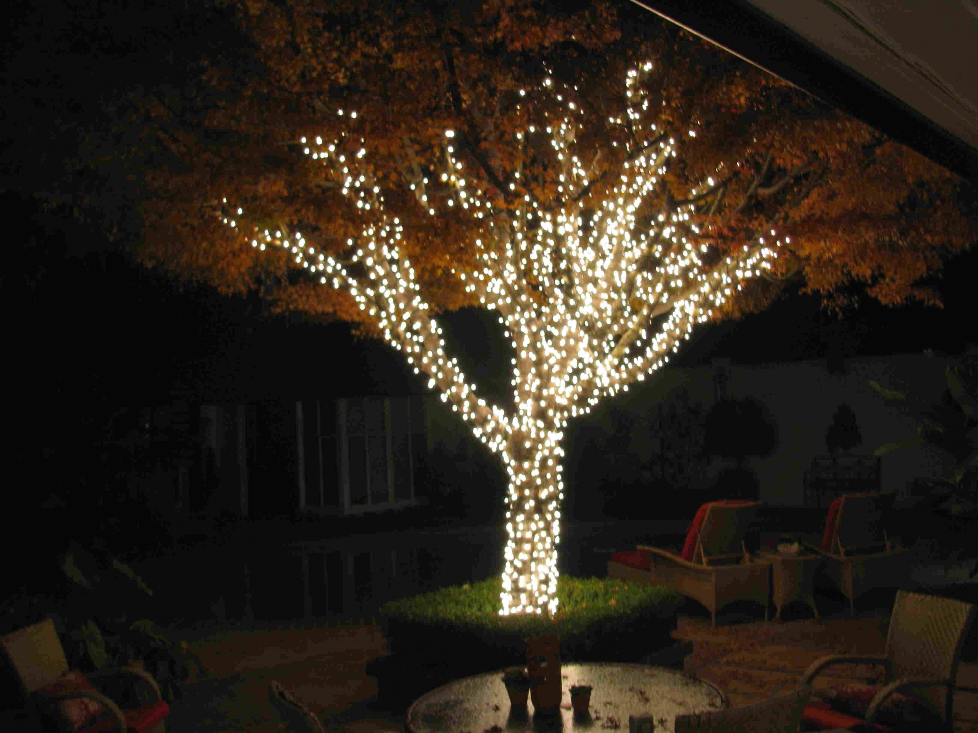 Displaying Gallery Of Outdoor Hanging Lanterns For Trees View 5 Of 20 Photos