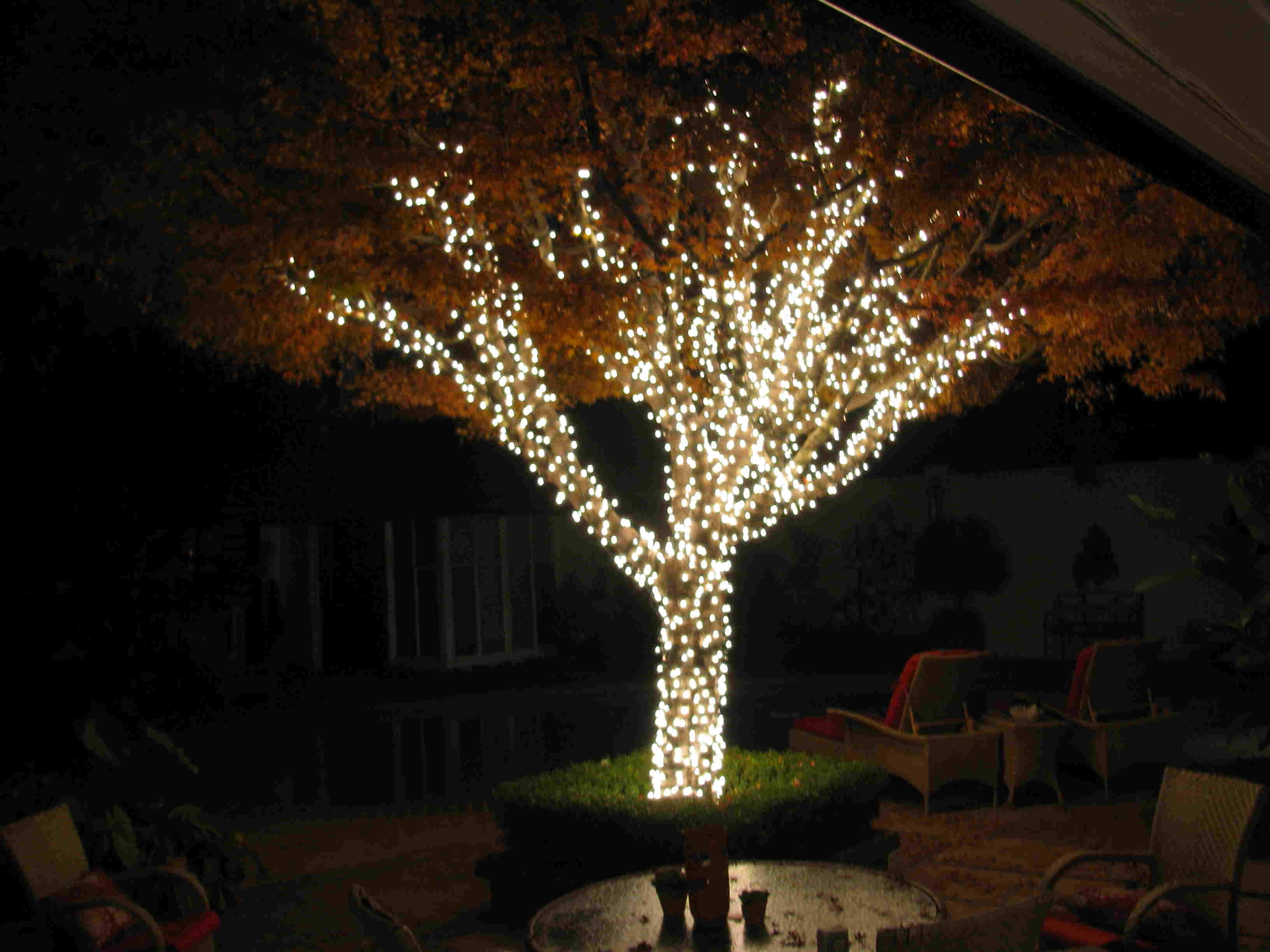 Trendy Tapesii Decorative Outdoor Lights For Trees Collection Of Pertaining Regarding Outdoor Lanterns For Trees (View 5 of 20)